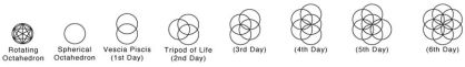 Seed of life stages