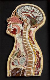 anatomy-211