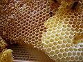 Honey_comb